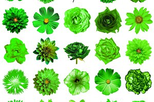 25 green flowers isolated on white