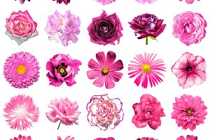 25 pink flowers isolated on white