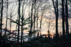 Blurred sunset in forrest