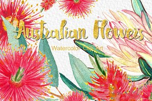 Australian flowers watercolor
