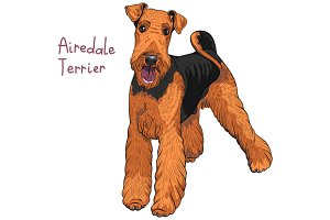 Dog Airedale Terrier breed.