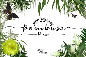 50% OFF Bambusa Pro