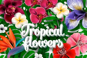 Tropical Flora, Vector