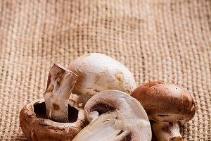 Fresh edible mushroom