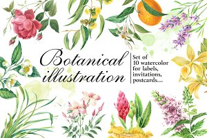 Botanical watercolor illustrations