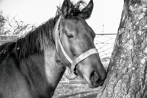 A horse in the forest b/w