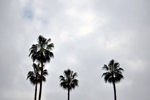 palm trees and cloudy sky