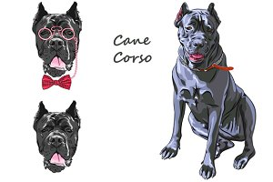 Dog black Cane Corso SET