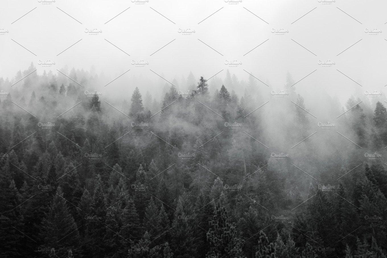 Black And White Misty : Black and white misty forest nature photos creative market