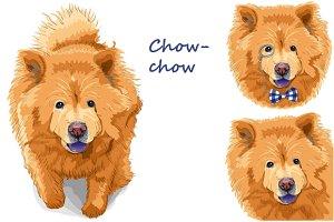 Dog chow-chow SET