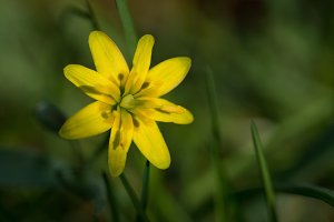 Yellow spring flower