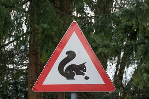 Squirrel traffic sign