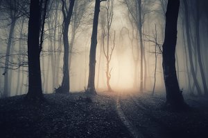 Halloween forest with fog