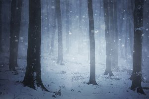 Winter forest with snow and fog