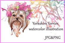 Yorkie. Watercolor illustation.