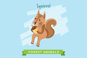 Squirrel Vector, forest animals.