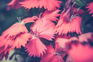 Red Flowers #3