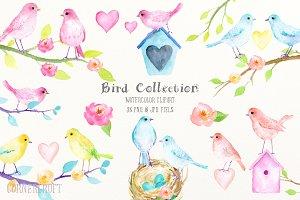 Watercolor Birds Pastel Color
