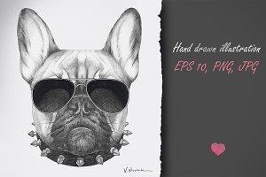 French Bulldog / Street Style