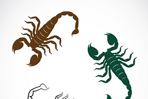 Vector image of an scorpion