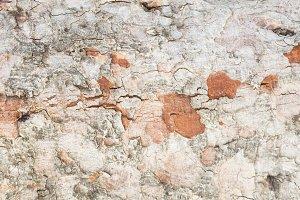 Texture tree bark