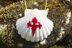 shell of Compostela pilgrims