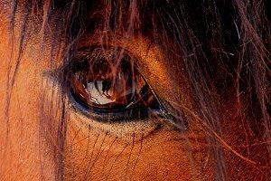 Eye's horse