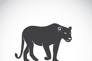 Vector image of an female lion