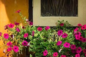 Flowers near abandoned window