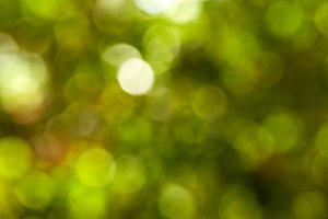 Beautiful nature green bokeh background