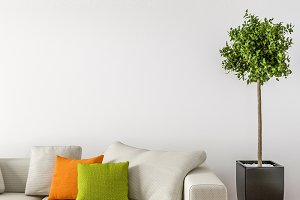 Sofa and Interior plant, empty wall