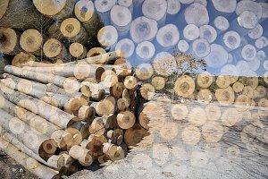 Wooden logs cut.