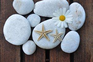 starfish and daisy