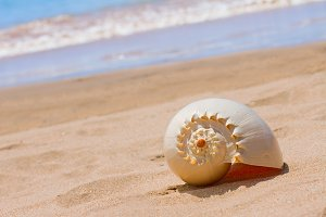 sea shell on a beach