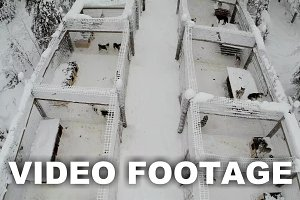 Aerial view of dogs in cages