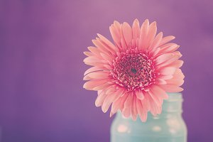 Cheerful Pink Flower