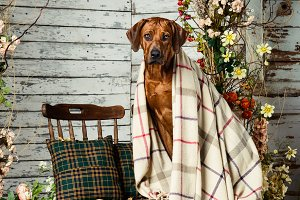 A dog in autumn decorations
