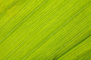Green fresh leaf closeup background