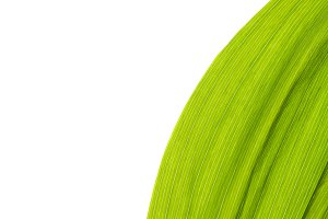 Green fresh leaf isolated background