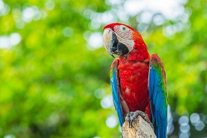 Colourful Macaw parrots