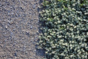 ground cover plants and sand