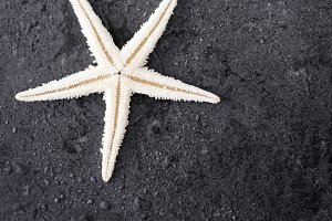 Starfish on black stone background