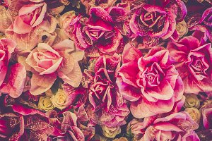 Roses flower background
