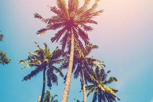 vintage coconut tree