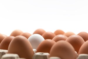Fresh Eggs on White Background