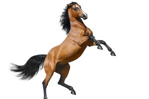 Bay horse rearing