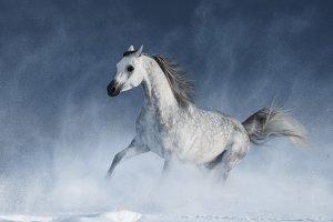 Arabian horse and snowstorm