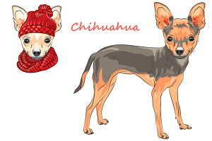 Dog Chihuahua SET