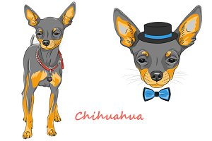Dog Chihuahua SET 2