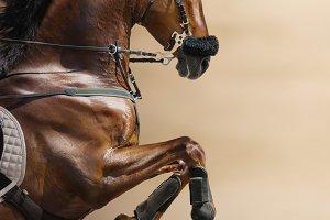 Chestnut jumping horse in hackamore